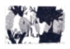 Trees_Print.jpg