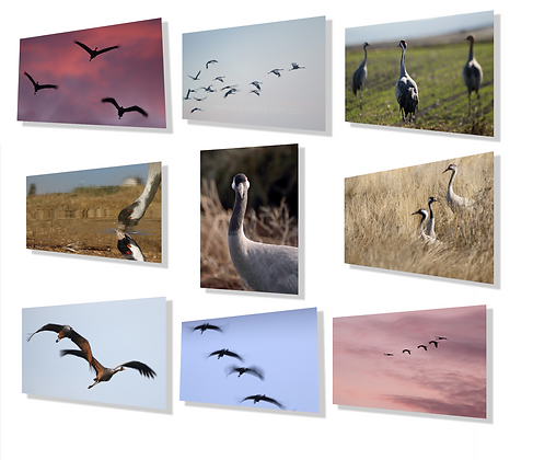 10 postcards