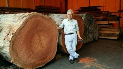 南洋材 原木 大径 ディレニア