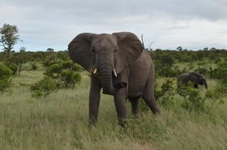 África do Sul: um pouco de tudo em 12 dias