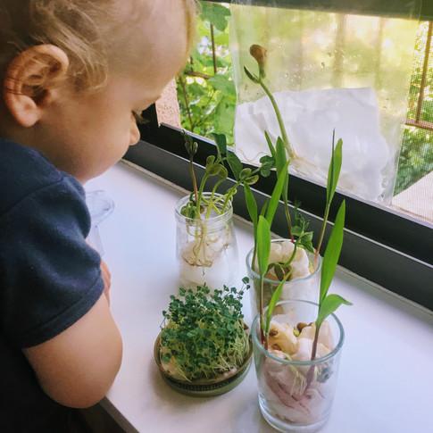 Backyard Science Baby: Seeds & Germination