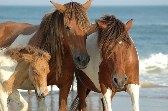 wild-horse7.jpg