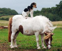 horse-dog.JPG