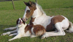 pictures-of-dogs-and-horses_1.jpg