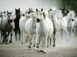 horse-wallpapers.jpg