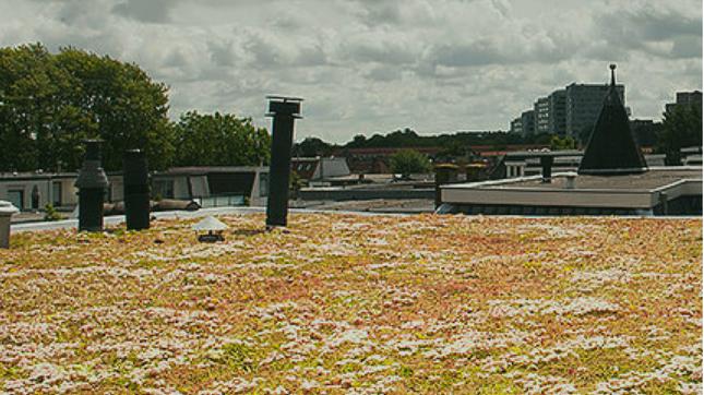 Hoe zinvol zijn groene daken voor climate resilience in Den Haag?