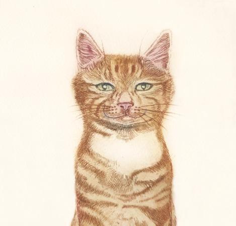 Ginger Tiger - detail