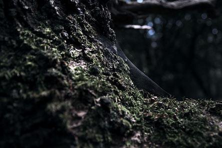 Spider%2520Web_edited_edited.jpg