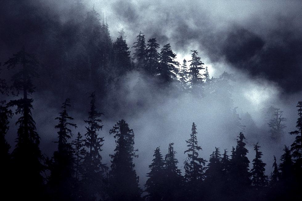 Forest%2520Scene_edited_edited.jpg