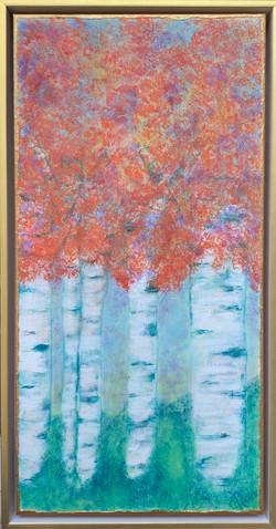 Aspens framed