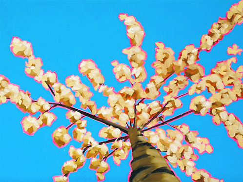 Looking Up White Blossom to Calm