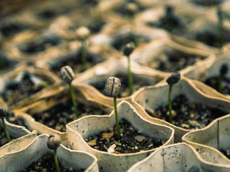 Plant the Seeds of Your Success