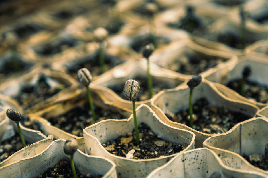 A Parable of Germination