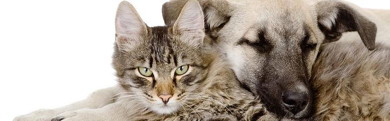 Tierarztpraxis Rothenburg, Tierarzt, Tierklinik, Luzern, Sempach, Emmen, Kleintierpraxis, Notfall, Unfall,Vergiftung