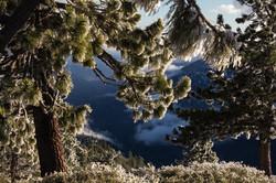 Snowy-Pines-4-2-14