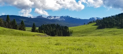 ...Spanish-Peaks With Buffalo-Herd..