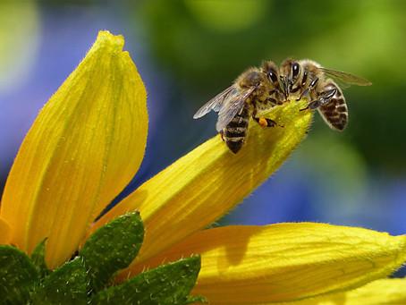 Perché l'estinzione delle api ti riguarda in prima persona?