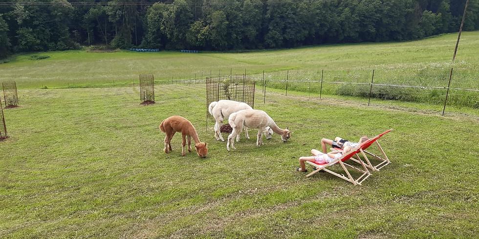 Familiennachmittag auf der Weide