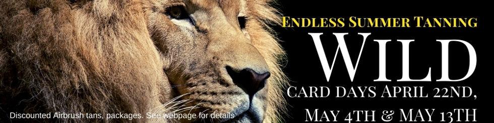 Wild Lion Photo Event Banner.jpg