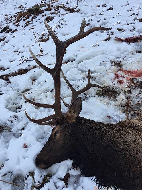 Idaho Bull Elk Hunt