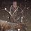 Thumbnail: Colorado Bull Elk Hunt