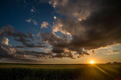 cornfieldwsun.jpeg