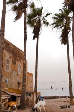 Senegal_103.jpg