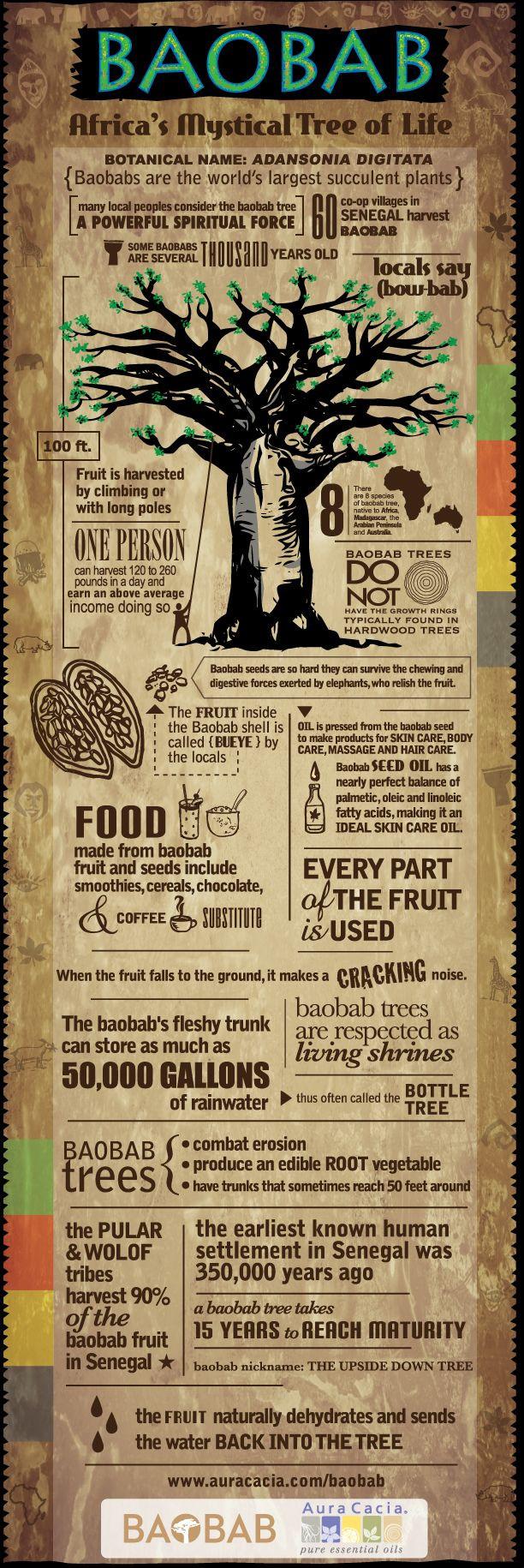 hoe kun je de baobab, Afrika's mystieke levensboom, gebruiken?