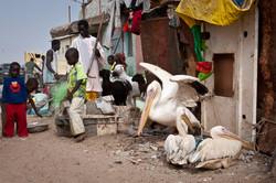 Senegal_129.jpg