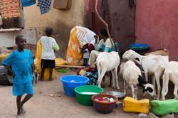 Senegal_094.jpg