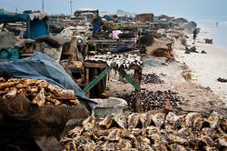 gedroogdevismarkt.jpg