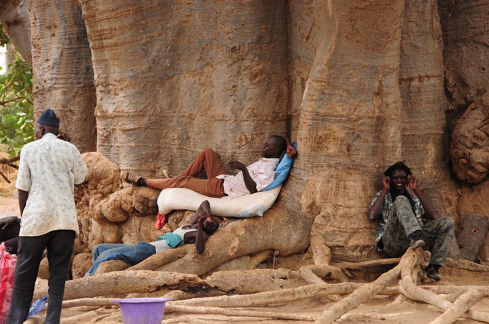 heilige baobab in Joal Fadiouth met rechts Ibrahim 'Lodia' Diallo