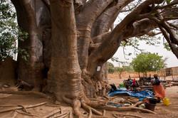 Senegal_044.jpg