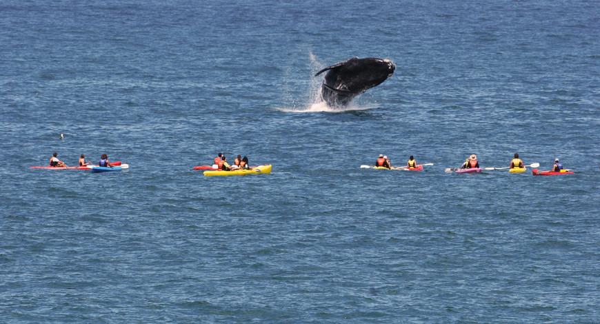 Whale Hermanus 1_08i.jpg