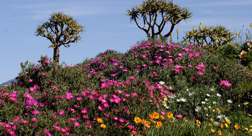 Flowers Ramskop Reserve 8_06b.jpg