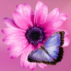 flower-2019057_960_720_edited_edited_edited_edited.jpg