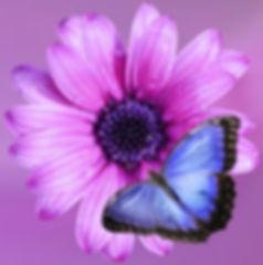 flower-2019057_960_720_edited_edited_edited.jpg