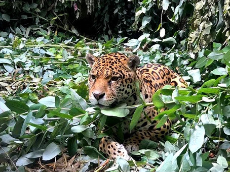 Amaru Biopark: A wild animal rescue experience