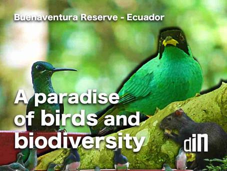 A PARADISE OF BIRDS & BIODIVERSITY • Buenaventura Reserve - Ecuador