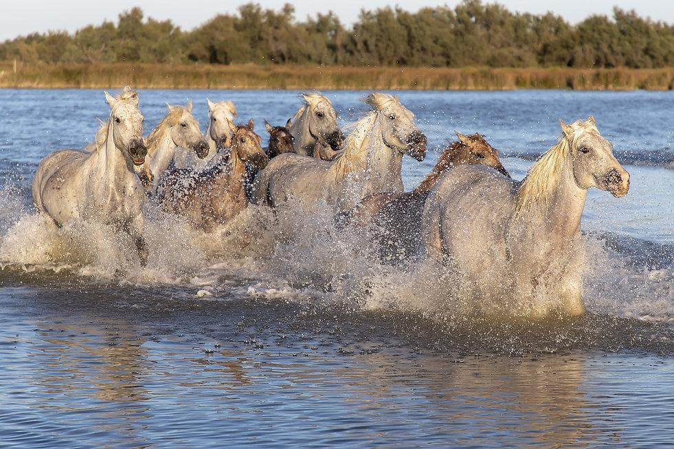 horses-3723776_1920.jpg