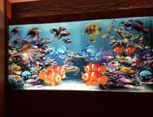 Aquarium Lichtbild