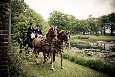 horses-in-park-325684.jpg