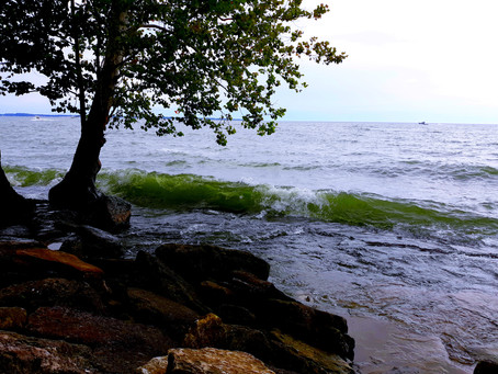 Making Friends With Lake Erie