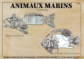 anoukmoulin-infografie.jpg