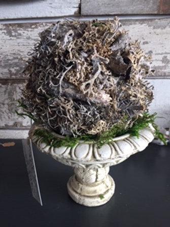 Moss ball on urn