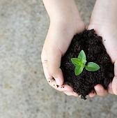 Planta de Retenção