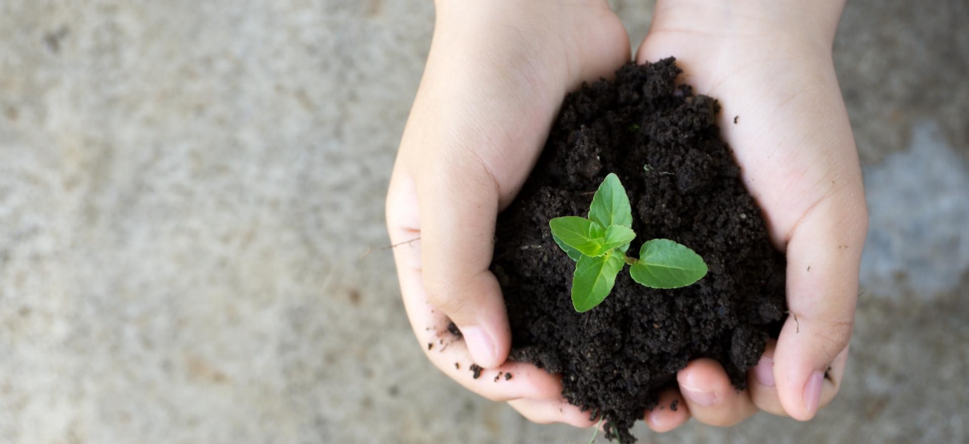 Educación Ambiental y Capacitación Profesional