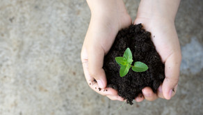 Plants - A New Relationship with Earth