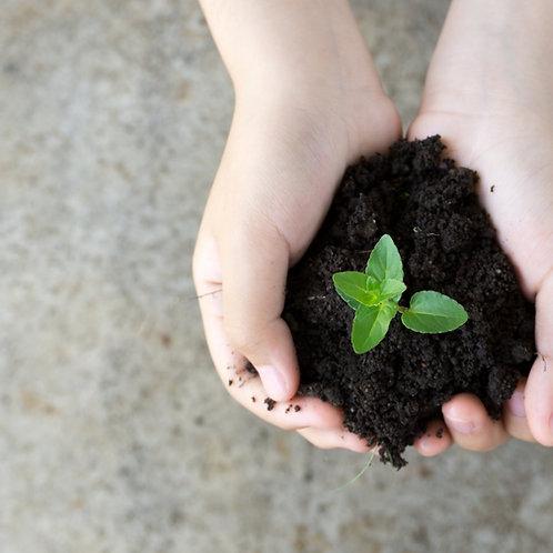 MeditationBreath, Focus, Seed of life
