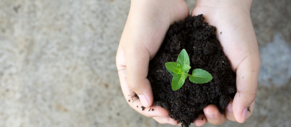 4 Ways to Celebrate Earth Day!